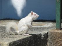 un hamster/rat albinos...hum!