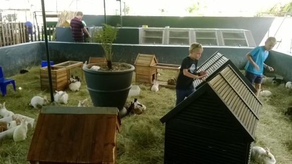Simon et Mathéo avec les lapins
