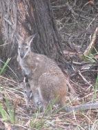 1 grande tête de kangoo et plus bas...une petite tête!