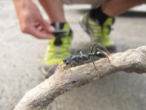 Myola et ses grosses fourmis!