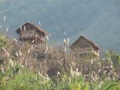 Maisons sur pilotis