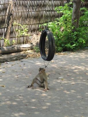 Pauvre petit singe attaché