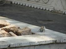 Plein d'écureuils